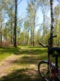 Fahrrad im Wald Stockfoto
