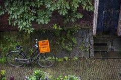 Fahrrad mit orange Korb steht auf der Pflasterung nahe der Kastanie Stockfotos