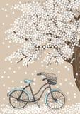 Fahrrad und blühender Baum Stockfoto