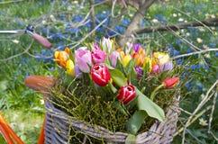 Fahrrad- und Frühlingsblumen in einem Korb lizenzfreie stockfotos