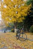 Fahrrad und gingkoes Lizenzfreies Stockbild