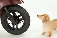 Fahrrad und Hund Lizenzfreie Stockfotografie