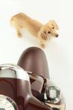 Fahrrad und Hund Lizenzfreie Stockbilder