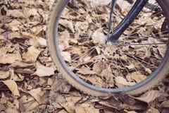Fahrrad und trockener Blattfall des Herbstes Lizenzfreie Stockbilder