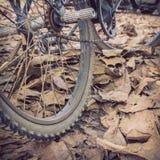 Fahrrad und trockener Blattfall des Herbstes Lizenzfreies Stockbild