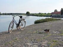Fahrrad und Wildente Stockbild