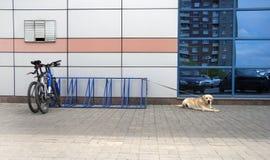 Fahrradparken und -hund Lizenzfreie Stockfotos