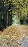 Fahrradpfad im Herbst Stockbild