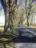 Fahrradreise in Polen Eichengasse nahe Naclaw Stockbild