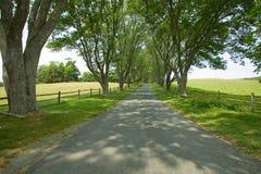 Fahrstraße von Bäumen gesäumt zu Ash Lawn-Highland, Haus von Präsidenten James Monroe, Albemarle County, Virginia Lizenzfreie Stockfotos