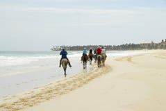 Fahrt auf Pferderuecken auf dem Strand Stockfotos