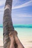 Fahrwerkbeine auf einer Palme Stockfotografie
