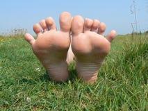 Fahrwerkbeine auf Gras Stockfotos
