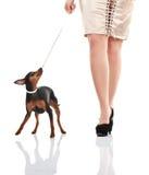 Fahrwerkbeine der Frau mit und kleiner Hund Stockbilder