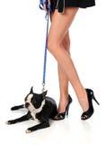 Fahrwerkbeine der Frau und Boston-Terrier Lizenzfreie Stockbilder