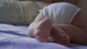 Fahrwerkbeine neugeboren Hund der Brut ein Schosshund stock video