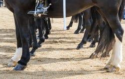 Fahrwerkbeine und Hufe des Pferds Stockbild