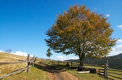 Faia-árvore e estrada do outono Foto de Stock Royalty Free