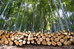 A faia Forest Pile da madeira entra a borda da floresta fotos de stock royalty free