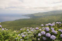 Faial, Azores Royalty Free Stock Photos