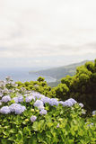Faial, Azores Royalty Free Stock Images