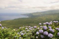 Faial, de Azoren Royalty-vrije Stock Foto's