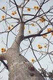 FAIKHAM-Blumen lizenzfreie stockbilder