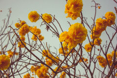 FAIKHAM flowers. Park at sunset Stock Photography