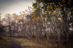 FAIKHAM flowers. FAIKHAM trees and flowers park at sunset Royalty Free Stock Photography