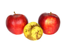 Failure. One ugly apple in front of two good apples isolated on white background Stock Photography
