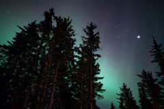 Faint Aurora Glow. Glow of Northern Lights through an Alaskan forest with stars Royalty Free Stock Photos