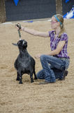 Fair Judging of Goat contest Royalty Free Stock Photo