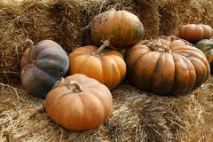Fair of a pumpkins Royalty Free Stock Photos
