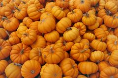 Fair of a pumpkins Royalty Free Stock Photo