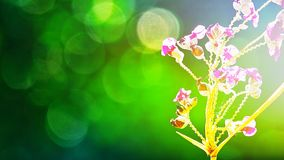 Fair right beautiful purple flowers on abstract blurred green background with natural bokeh abstract and background. Fair right beautiful purple color flowers on royalty free stock image