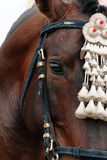 Fair of Seville. Horse close up Royalty Free Stock Image