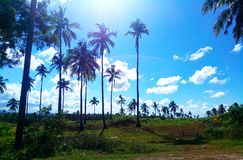 Fair weather going to the north of Cebu. A great landscape of field field with coconut trees along the road of national highway in the northern part of Cebu Stock Photography