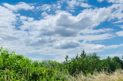 Fair weather landscape in summer Royalty Free Stock Images