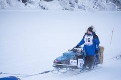 Jennifer Campeau heads down the trail. FAIRBANKS, ALASKA - FEBRUARY 3, 2018: Yukon Quest rookie Jennifer Campeau, from Rocky Mountain House, Alberta, heads down Stock Photos