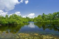 Fairchild tropical botanic garden Stock Photos