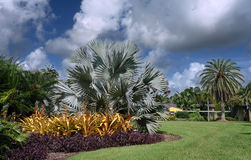 Fairchild tropical botanic garden stock images