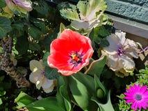 桃红色玫瑰是美丽的 免版税库存图片