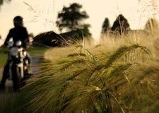 Faire du vélo par les champs de maïs autrichiens photographie stock libre de droits