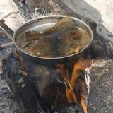 Faire frire des poissons. Images libres de droits