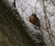 Faire une pointe d'écureuil Image libre de droits