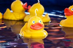 Fairground Ducks Royalty Free Stock Photos