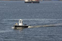 Dog on bow of utility boat. Fairhaven, Massachusetts, USA - May 8, 2018: Big dog apparently intent on guiding his ride across New Bedford harbor stock image