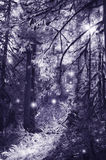 Fairies in moonlight dancing in the magical forest Stock Photography