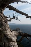 Fairly dry dead tree on the shore of the ocean. And the glare of the sun Stock Photo