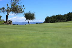 Fairway on a golf course Royalty Free Stock Photo